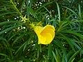 Yellowflower9.jpg