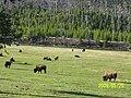 Yellowstone NP, WY, USA - panoramio (1).jpg