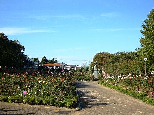 Yono Park Rose Garden
