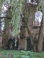 Ziemięcice, ruiny kościoła św. Jadwigi (6).JPG