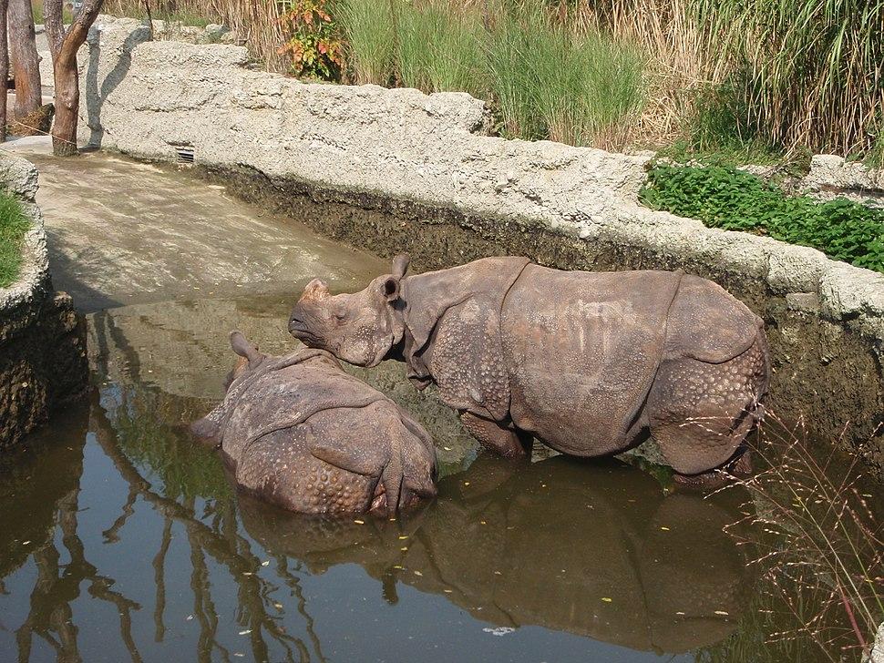 Zoo Basel Rhinos