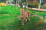 Zoo de Lisboa by Juntas 67.jpg