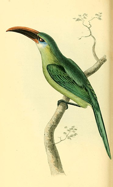 Zoological Illustrations Volume I Plate 44.jpg