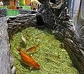 Zootopia - fish.jpg
