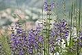 Zvole, Zvolská homole, květiny.JPG
