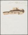 Zygaena malleus - 1700-1880 - Print - Iconographia Zoologica - Special Collections University of Amsterdam - UBA01 IZ14100059.tif