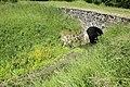Étang des Noës le 4 juin 2015 - 045.jpg