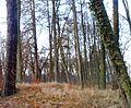 Świętoborzec - zabytkowy park.jpg