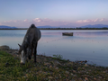 Λίμνη Κερκίνη 2.png