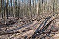 Березневий ліс.jpg