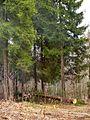 Большие деревья - panoramio.jpg