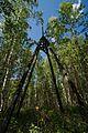 Вершина г.Сионитовой - panoramio.jpg