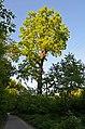 Віковий дуб, з.п. «Рубежівський» 005.jpg