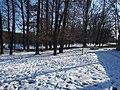 Голосіївський ліс у Києві.jpg