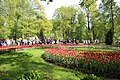 Елагин парк, фестиваль тюльпанов7887.jpg