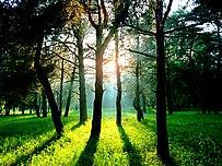 Захід сонця в Басівському парку.jpg