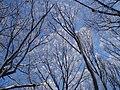 Зима, Голосіївський ліс біля Головної астрономічної обсерваторії.jpg