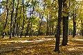 Кочубеївський парк у місті Батурин.jpg