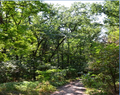 Ліс 4.png