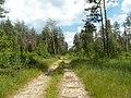 Между с-т Русь и Селиванихой 2013 - panoramio (13).jpg