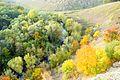 Осень на реке Воргол - panoramio (1).jpg
