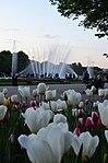 Парк имени Горького в Москве. Фото 63.jpg