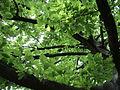 Парк шума Гази Баба во мај (114).JPG