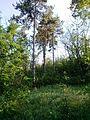 """Парк шума """"Гази Баба"""" 64.jpg"""