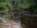 Плотина бобров на Чурге - panoramio.jpg