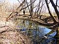 Правобережная старица реки Яузы с фрагментом низкой поймы 05.jpg