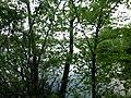 Р.Артополот зі сторони с.Піски в бік с.Пісочки.jpg