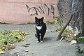 Санкт-Петербург, коты в СПбГМУ (2).jpg