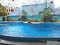 Сочинский дельфинарий парка «Ривьера». 18.jpg