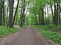 Тропинка через парк на Заречную - panoramio.jpg