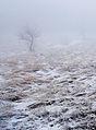 Туман на Южном Демерджи 1.jpg