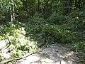 Украина, Киев - Голосеевский лес 192.jpg