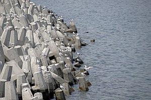 رفتار مرغان دریایی نوروزی یا یاعو در کشور عمان، شهر مسقط، ساحل دریای عمان - عکس مصطفی معراجی 07.jpg