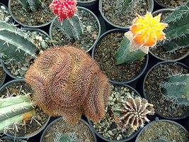 گلخانه کاکتوس دنیای خار در قم. کلکسیون انواع کاکتوس 25.jpg