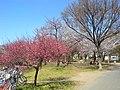 南河原公園 - panoramio.jpg