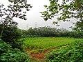 安徽省巢湖市含山县 - panoramio (290).jpg