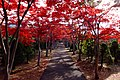平岡樹芸センター(Hiraoka arboriculture center) - panoramio (27).jpg