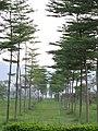 御林军 - panoramio.jpg