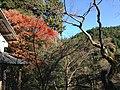 槙尾山西明寺 - panoramio (2).jpg