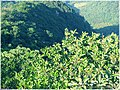 王子山森林公园 - panoramio (13).jpg