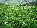 花の谷(Valley of the flower) - panoramio.jpg