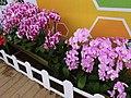 蘭 Orchids - panoramio (2).jpg