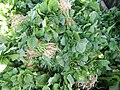 0251jfPanoramics Pulilan Fields Plants Philippinesfvf 30.JPG