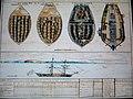087 Compagnie des Indes Plan d'un navire négrier.jpg