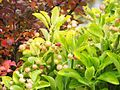 1462509 Pretty-plant 620.jpg