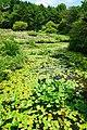 170811 Rokko Alpine Botanical Garden Kobe Japan09s3.jpg